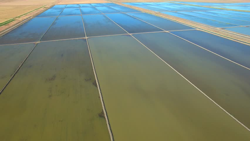 Aerial footage of Rice Crops, Ponds, Paddocks and Paddy in Hay, NSW (New South Wales) Australia. Irrigated from the Murrumbidgee River as part of the Murray Darling Basin.  | Shutterstock HD Video #25600469