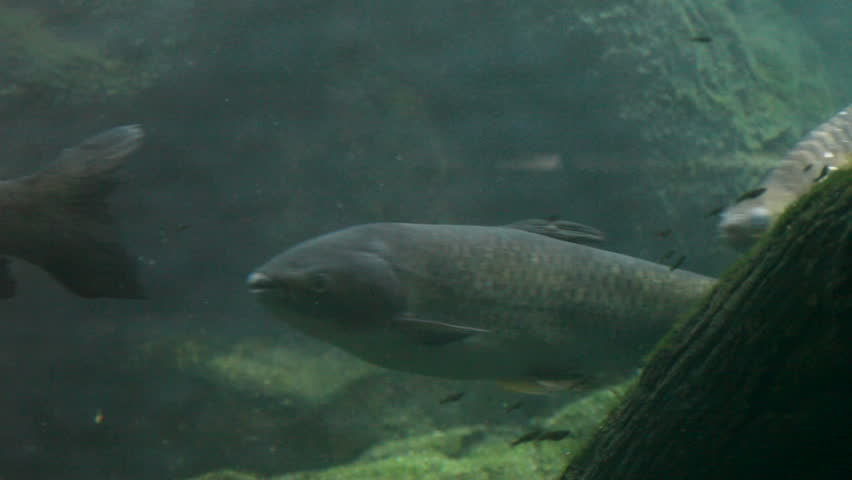Turtles, fish, underwater   Shutterstock HD Video #2580533