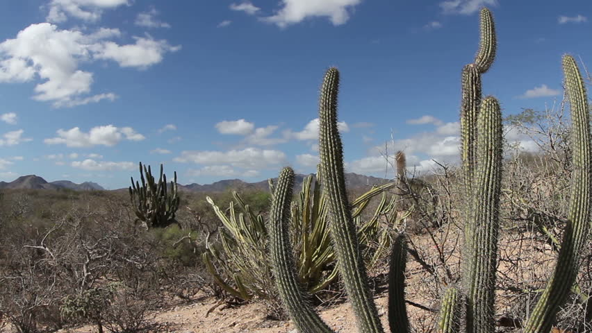 the beautiful desert landscape of baja california sur, mexico