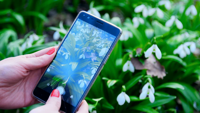 A woman is using a smart phone to take a photo of snowdrops in a spring forest | Shutterstock HD Video #25925183