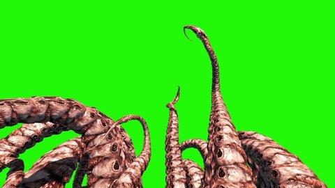 Tentacles Monster Octopus Green Screen 3D Rendering Animation