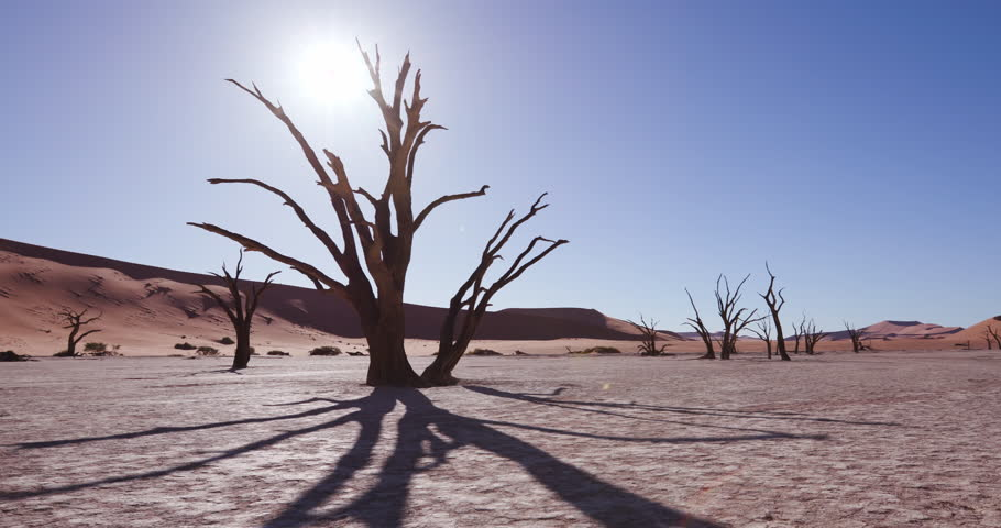 4K time lapse of tree shadow moving and sun setting behind a dead tree in the desert,Namibia