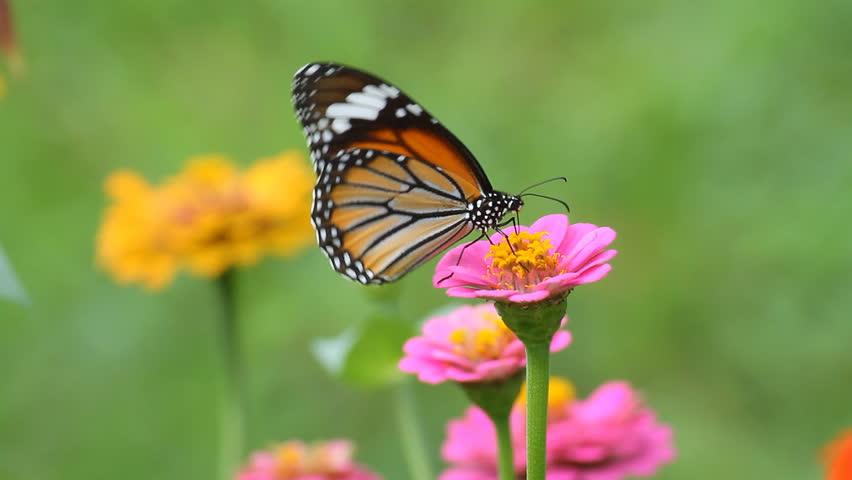 Butterfly eating pollen flower #2604353