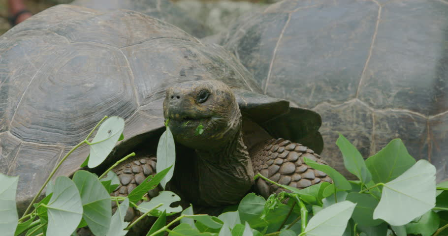 Header of tortoise