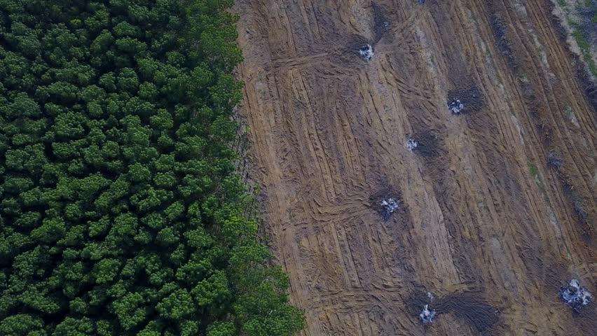 Deforestation aerial drone view. Environmental destruction, logging. | Shutterstock HD Video #26067287