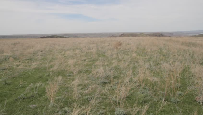 """the grass """"tumbleweed"""" slides on the steppe on wind"""