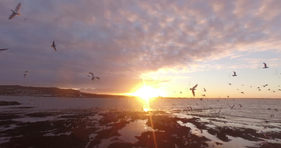 Drone shot trough group of seagulls at the coast of Ireland's eye, Ireland during sunset. #26081663