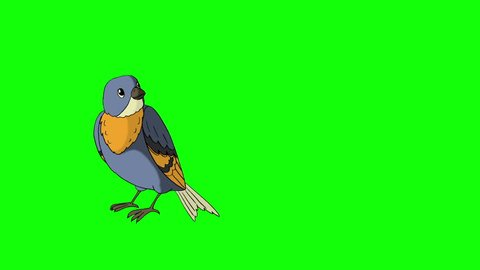 Blue Bird Came Flying. Animated Motion Graphic Isolated on Green Screen.