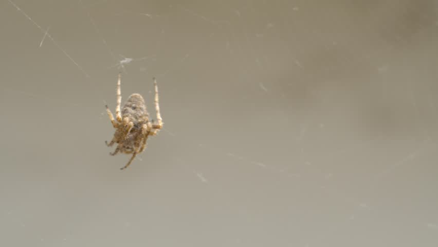Spider on a spider web | Shutterstock HD Video #26231423