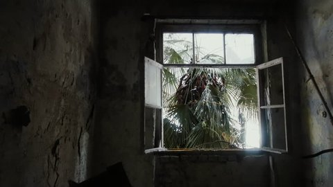 Smashed window of forsaken house in tropics, outside window grows palm tree, raining, ghost town. Concept of not held Paradise, denied dreams, vanished hopes