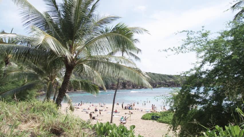 View of a beach through lush foliage, Waikiki Beach, Honolulu, Hawaii, USA