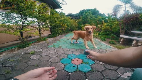 POV man playing with dog, dog jumps fail play ball