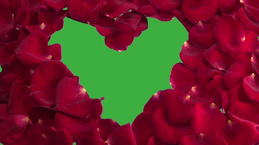 Background from petals of red roses. The heart is made up of the petals of the red rose.  Chroma key, green screen background.   Slow motion 240 fps. Slowmo. Full HD 1080p.    Shutterstock HD Video #26415743