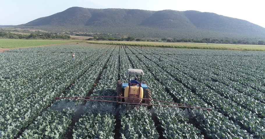 4K aerial view of farmer using digital tablet and monitoring a tractor spraying pesticide on a large scale vegetable farm | Shutterstock HD Video #26483549