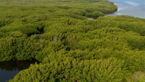 Flight over trees and shrubs in a Florida wetland