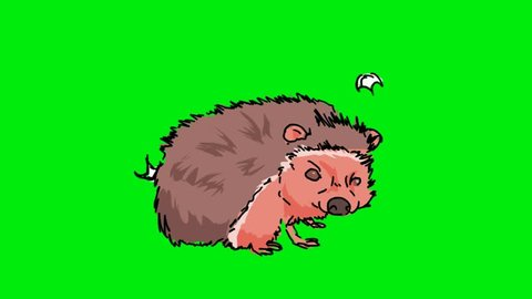 Hand Drawn Hedgehog On A Green Screen