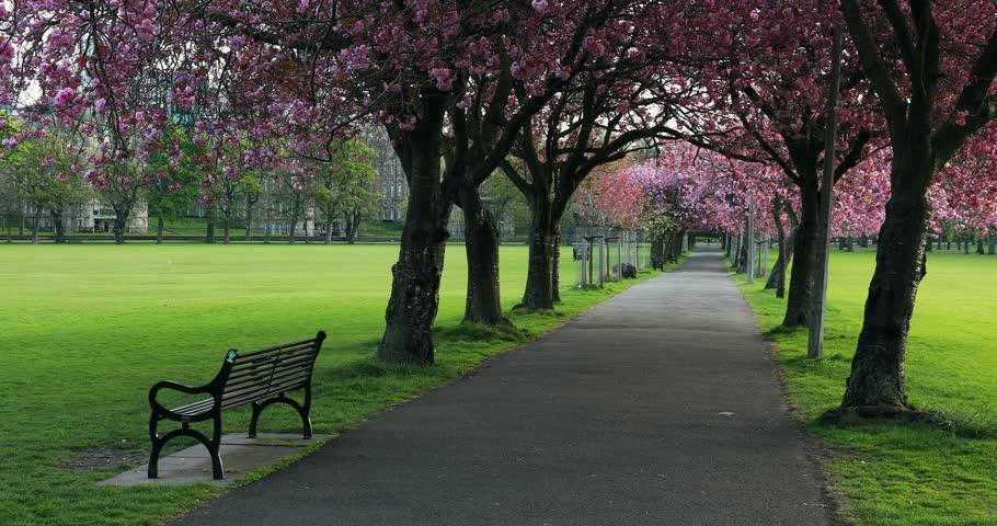Establishing Shot - The Meadows in the Centre of Edinburgh in Spring