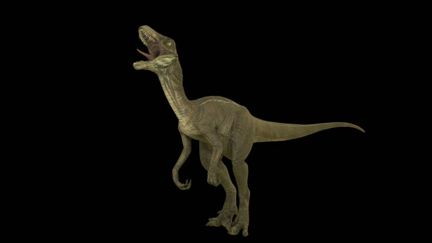 Roaring dinosaur Velociraptor. Production quality footage in ProRes HQ codec 25 FPS with alpha matte.