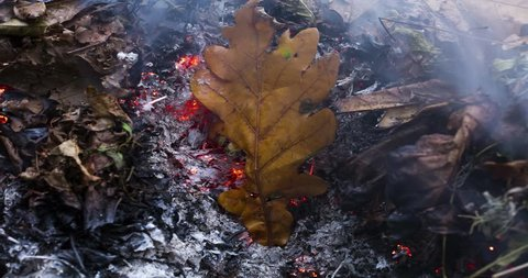 Timelapse video of a burning oak leaf in the ashes of a big pile of leaves and twigs in autumn in 4k 4096 pixels, 15fps