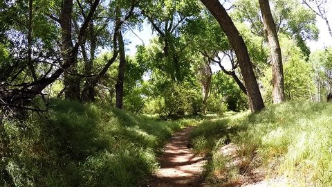 COTTONWOOD, AZ/USA: April 20, 2017- View of a hiker on trail in the Verde River greenway in Cottonwood Arizona. First person view walking along a dirt path among trees and lush vegetation.