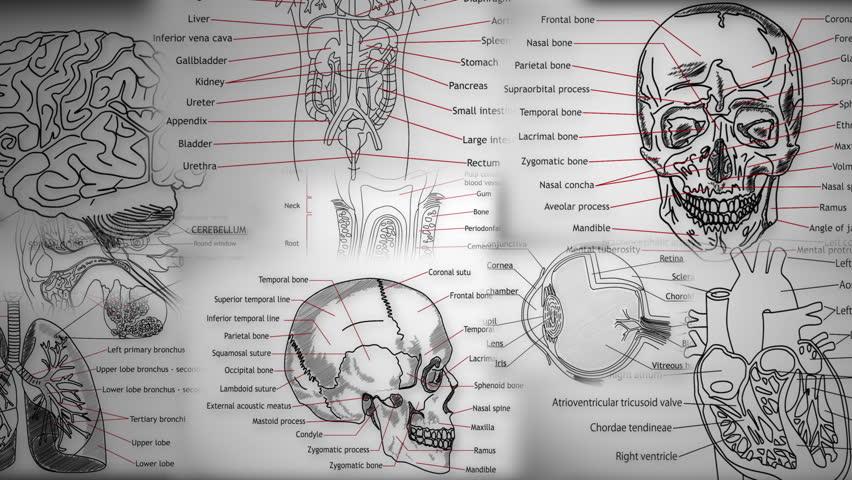 Eye Anatomy Royalty Free Stock Video In 4k And Hd Shutterstock