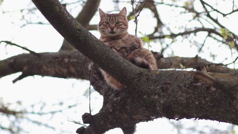 adult cat tree/Cat on the tree branches and the dog sits