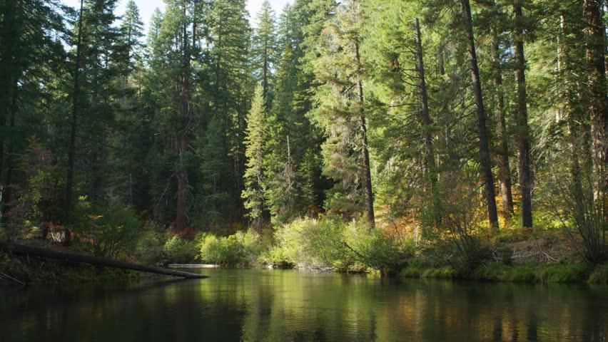 Fallen tree in river | Shutterstock HD Video #26904853