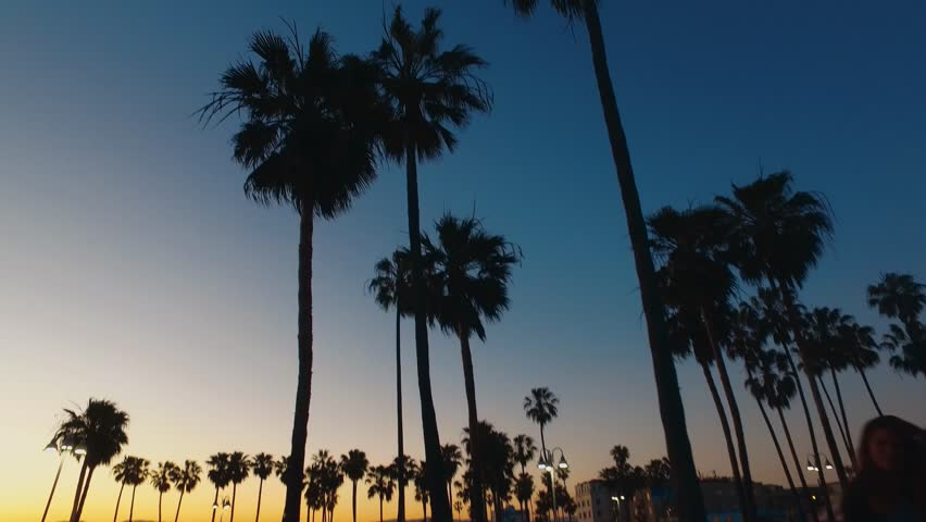 Palm trees at Venice Beach in the evening