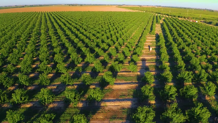 Agriculture Almond Tree Farm Crops Central Valley California Stanislaus