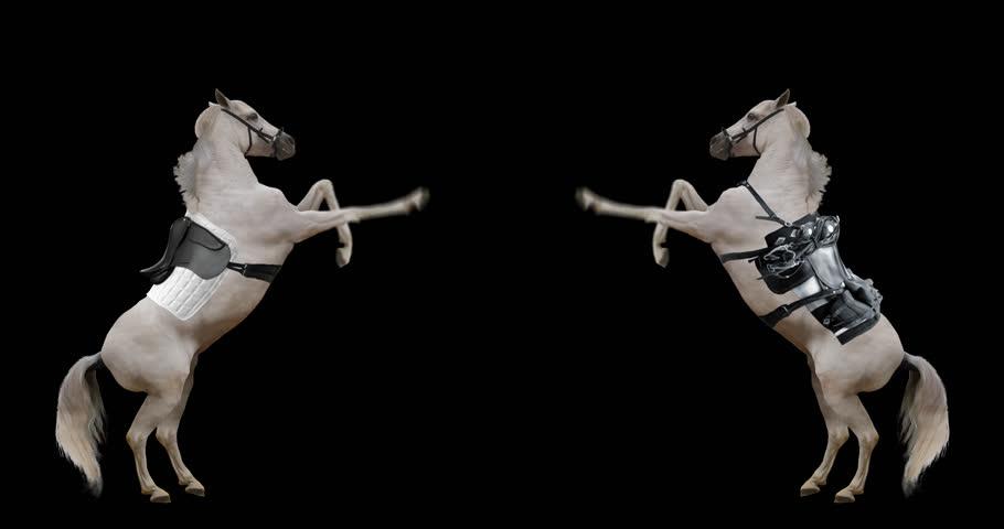 Horse saddled rose on its hind legs. White stallion rearing. Animation
