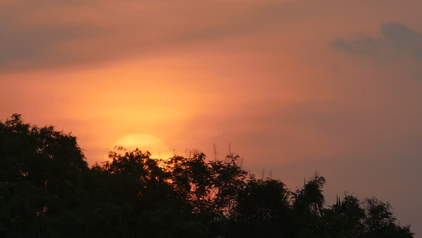 Sunset with the red sky over the tree canopy | Shutterstock HD Video #27249133