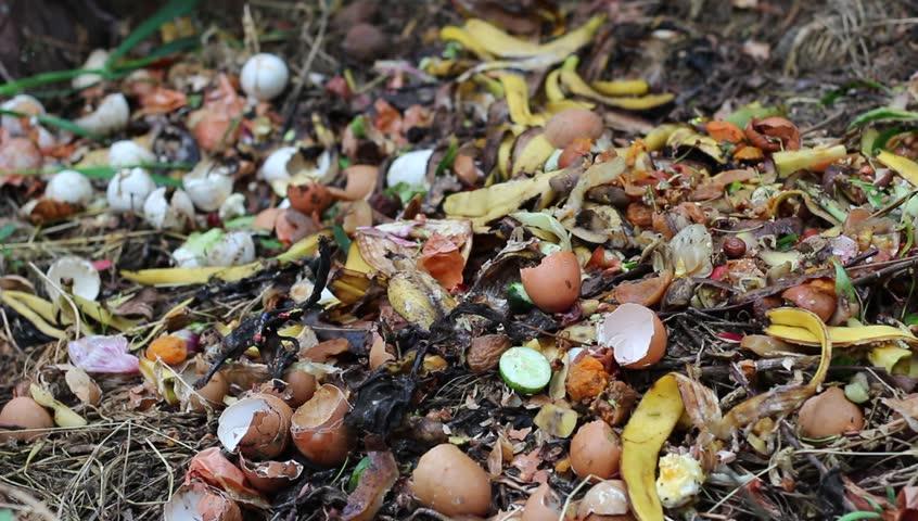 Green waste, leaves, food, kitchen scraps, fruit and vegetables, peels of potato, onion, lemon, tangerine, banana, kiwi, egg. Food waste for biodegraded by composting, and reused to fertilize soil