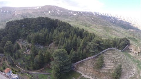 Cedars of God Forest, Bsharri. Drone shot of Cedar forest that preserves some of the most ancient cedars with the oldest being around 3000 years old.