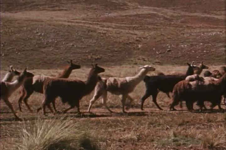 Header of Quechuan