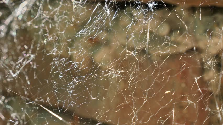 Brick wall and fine cobweb close-up 4K 2160p 30fps UltraHD footage - Detailed spider web  shallow DOF 3840X2160 UHD video | Shutterstock HD Video #27545803