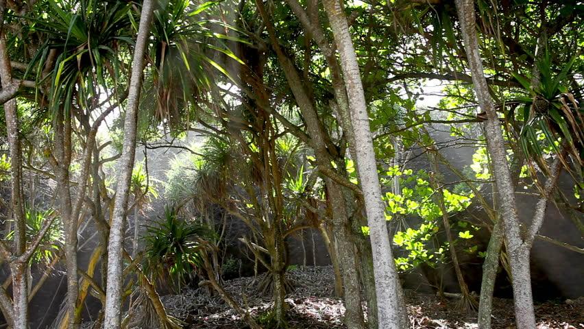 Tropical Canopy, Palm Trees, Rain Forest, Light Rays, Maui