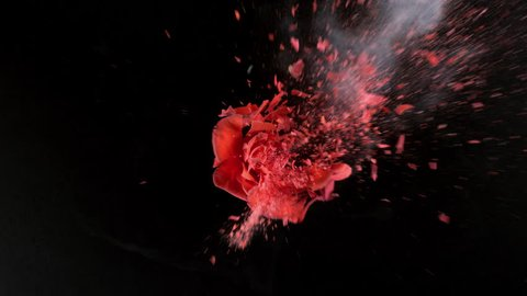 Bright red rose exploding in super slow motion, shot with Phantom Flex 4K