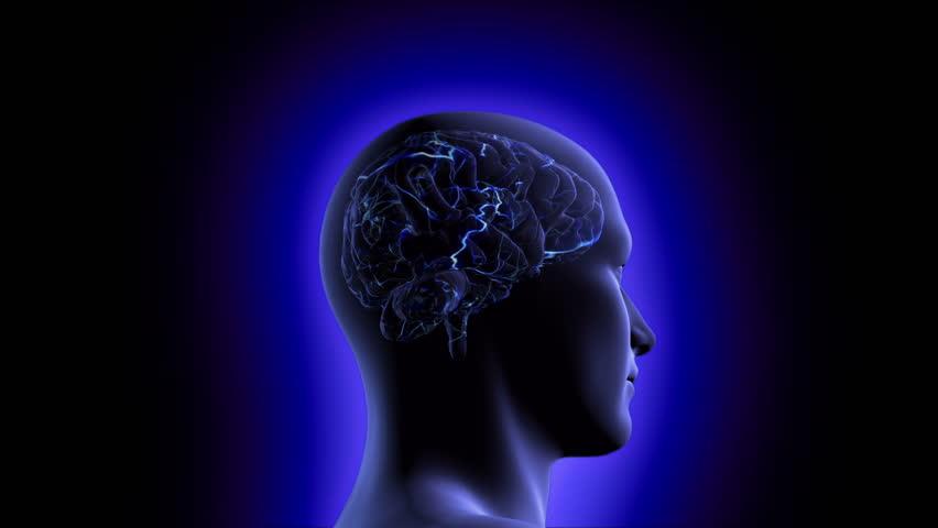 Stock Video Of Man Brain Anatomy 3705446 Shutterstock