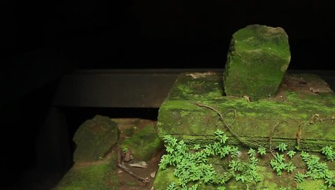 Shiva Lingam and Yoni, ancient and covered in moss, in Angkor Wat area, Cambodia, smooth horizontal tracking shot.MOV