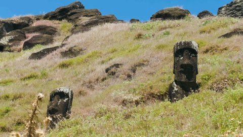 MS Moai heads in grass / Tapati Rapa Nui, Easter Island, Chile
