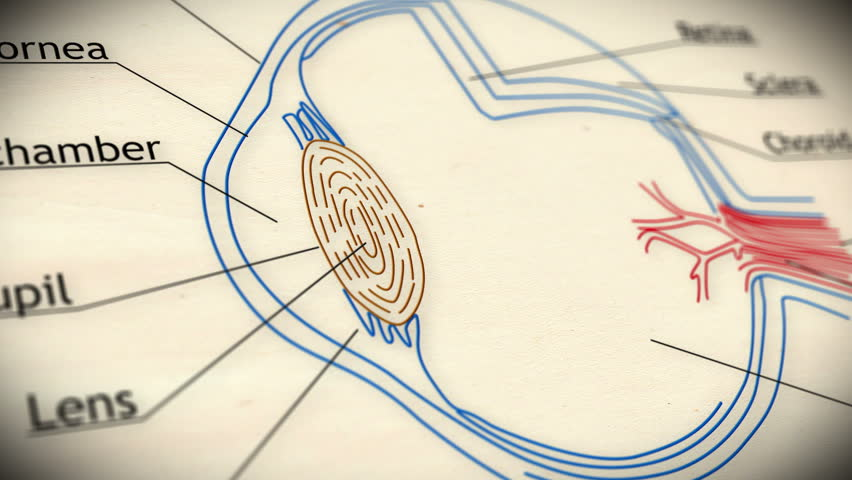 Anterior Chamber Stock Video Footage 4k And Hd Video Clips