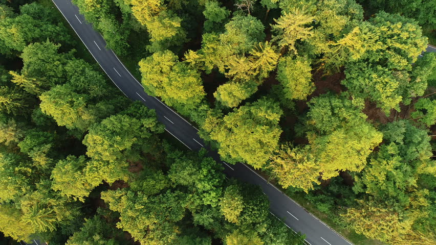 Aerial view of a road through the forest | Shutterstock HD Video #28148212