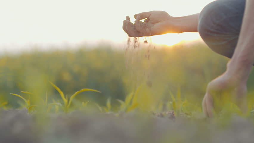 Soil, Agriculture, - Farmer hands holding and pouring back organic soil. | Shutterstock HD Video #28548973