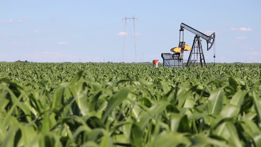 Oil Pump Jack in a Corn Field