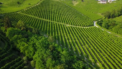 Drone view of Valdobbiadene hills - Prosecco country - Cartizze hills - Vineyards ready for harvest