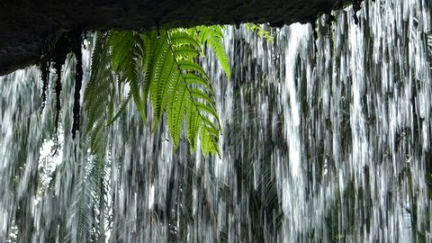 View from behind the waterfall with tropical plants hanging from above
