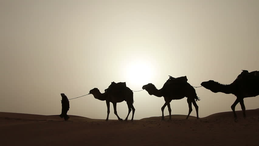 Arabic traditional headdress robe walking with his camels in the desert sand dunes silhouette sunset
