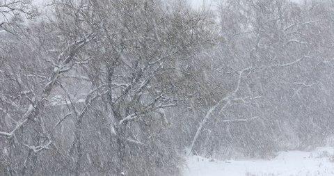 Heavy winter blizzard snowfall