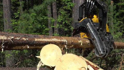 Mechanical maschine's arm cuts a freshly chopped tree trunk in a forest