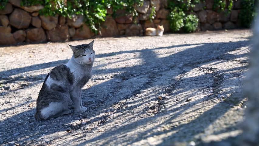 Header of Alley Cat